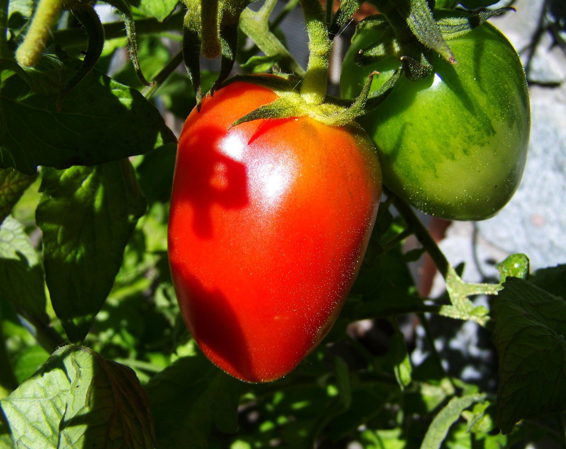 red-green-tomato-950225_1920